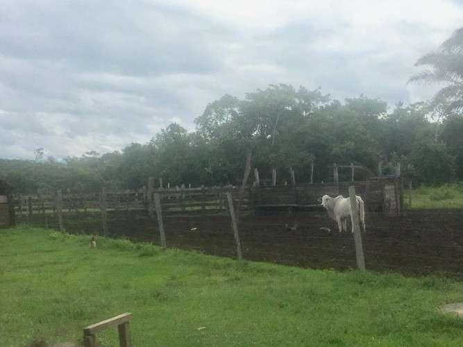 240 hectáreas sobre carretera a santa rosa del sarah1524067810