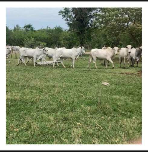 En warnes comunidad los ciervos próxima a carretera nueva, vendo 95 hectáreas saneadas1866010075