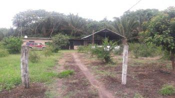 En Venta 9 Hectareas Municipio De Porong