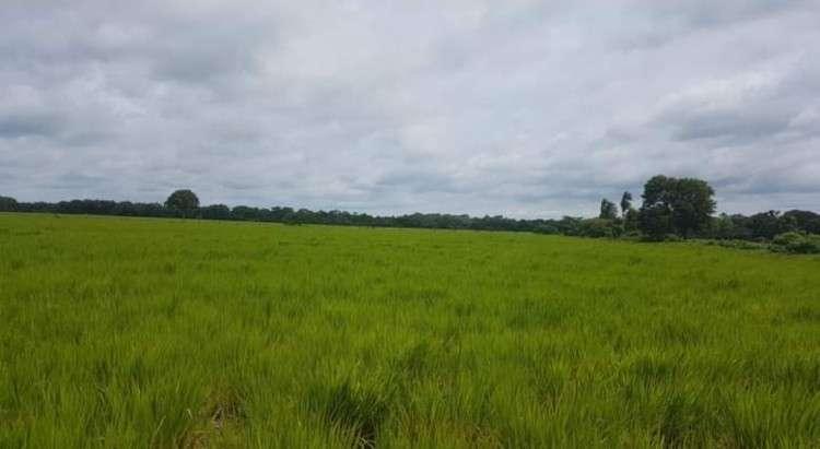 ¡¡ se vende espectacular propiedad ganadera a 3 km de la plaza de montero hoyos de 108 hectareas !!1250822568
